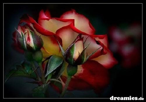 http://img7.dreamies.de/img/382/b/27j6mfvuepw.jpg