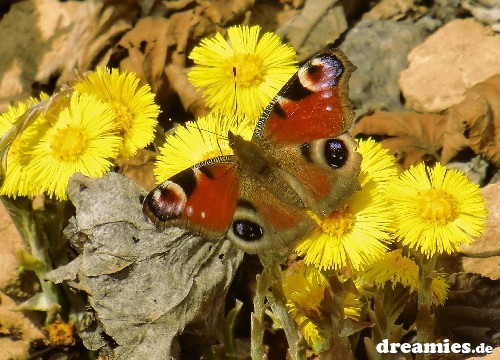 http://img7.dreamies.de/img/859/b/jqyvxfwg9ym.jpg